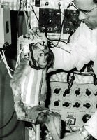 Albert II First Monkey Into Space
