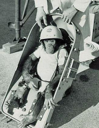 http://www.outerspaceuniverse.org/media/monkeys-space-travel.jpg